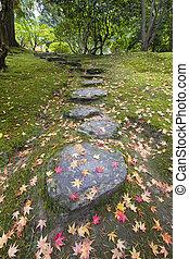 pierre, feuilles, arbre, étapes, mousse, baissé, érable
