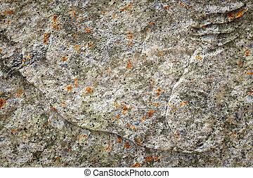 pierre, lichen, vieux, fond