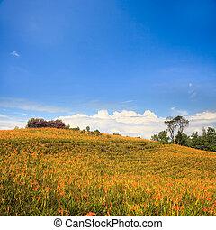 pierre, montagne, soixante, taiwan, daylily, fleur