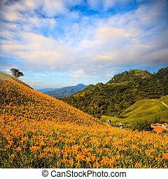 pierre, orange, soixante, daylily, taiwan, montagne