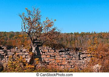 pierre, vieux, barrière, arbre, forêt automne, fond, colors.