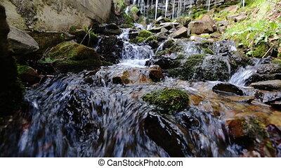 pierres, été, couvert, ruisseau, rochers, eau, forêt verte, mousse, écoulement, par, long