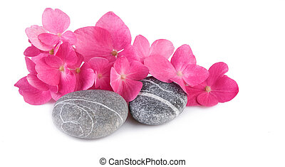 pierres, arrière-plan rose, spa, fleurs blanches
