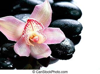 pierres, fleur, fond, spa, blanc, orchidée