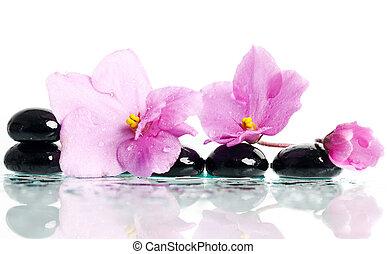 pierres, fleur rose, traitement, spa, masage