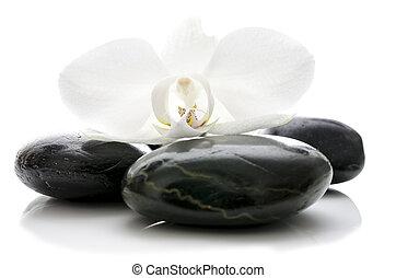 pierres, fleur, zen, orchidée