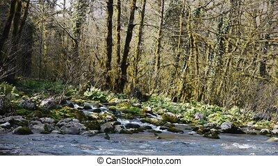 pierres, montagne, arbres, 3, gorge, rivière