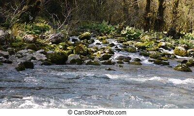 pierres, montagne, arbres, 5, gorge, rivière