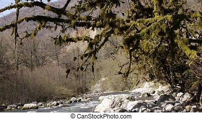 pierres, montagne, arbres, 9, gorge, rivière