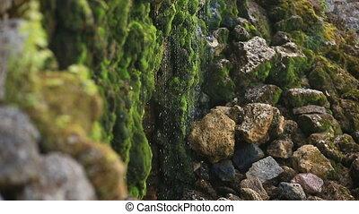 pierres, mousse, ruisseau, contre, rochers, eau, chute eau, eclabousse, fond, couvert, long