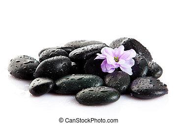pierres, pierre, fleur, fleur, pourpre, isolé, eau, white., spa, gouttes
