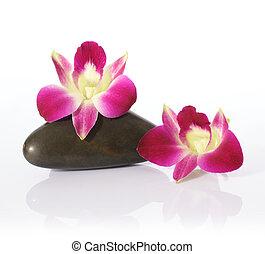 pierres, rivière, orchidée
