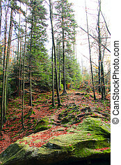 pierres, sapin, automnal, mousse, forêt