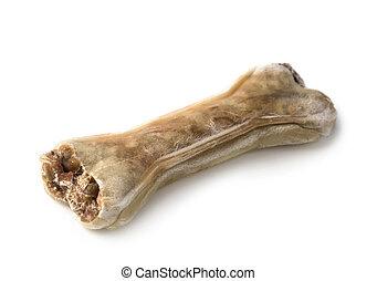 pies, żuć, kość