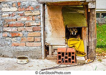 pies dom