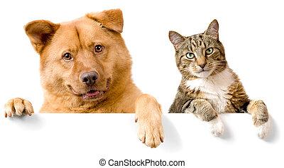 pies, i, kot, nad, biały, chorągiew