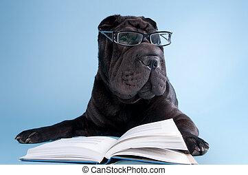 pies, książka, czarnoskóry, shar-pei, czytanie okulary