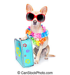 pies, letnie wakacje