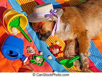 pies, na wakacjach