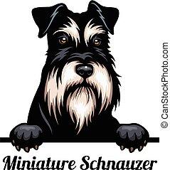 pies, odizolowany, wizerunek, głowa, psy, breed., miniatura...