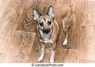 pies, podłoga