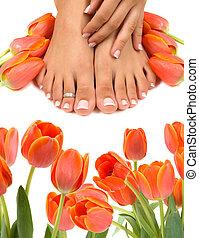 pies, tulipanes