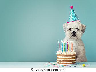 pies, urodzinowy placek