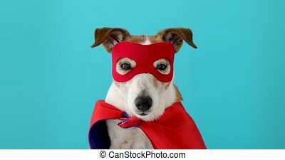 pies, wspaniały, kostium, bohater