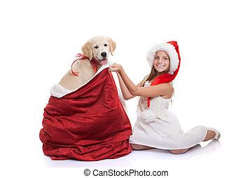pieszczoch, święto, gwiazdkowy dar, pies