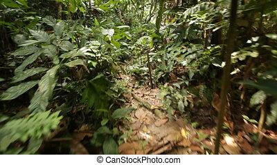 pieszy, dżungla