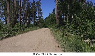 pieszy, kobieta, plecak, wycieczkowicz, słupy, nordycki, precz, droga, las