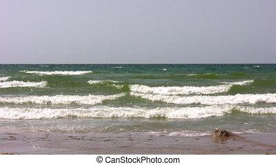 pieszy, plaża, mała dziewczyna, macierz