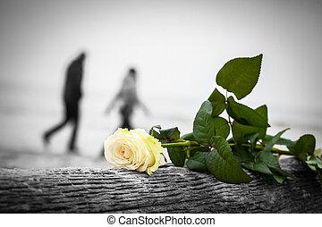 pieszy, plaża., miłość, złamany, róża, para, drzewo, tło.,...