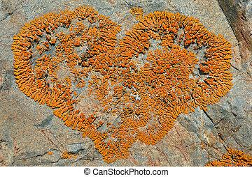 pietra, 2, lichene