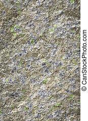 pietra, lichene, vecchio, fondo
