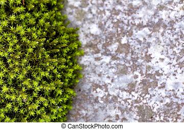 pietra, verde, muschio, fondo