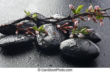 pietre, fiore, primavera, zen, bagnato, terme
