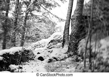 pietre, foresta