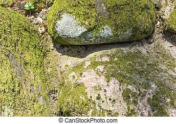 pietre, naturale, muschio, -, campo, fondo