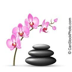 pietre, rosa, isolato, terme, fiori bianchi, pila, orchidea
