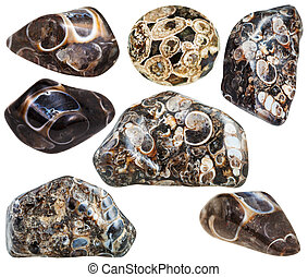 pietre, turritella, set, minerale, vario, agata