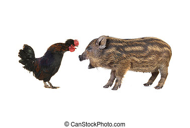 pig and black cock