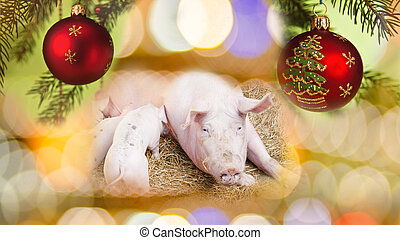 Pig and Piglets with New Year Background