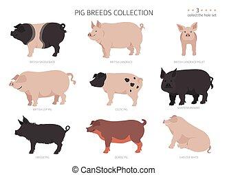 Pig breeds collection 3. Farm animals set. Flat design. Vector illustration