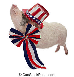 Pig Dressed for Fourth of July - A pot-bellied pig wearing a...