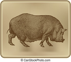 Pig, hand drawing, vector illustration.