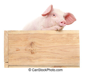 Pig in wooden box.