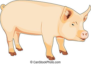 Pig isolated on the white