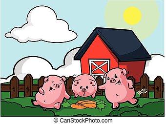 Pig livestock