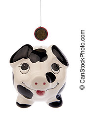 Pig looking up to Euro coin front side
